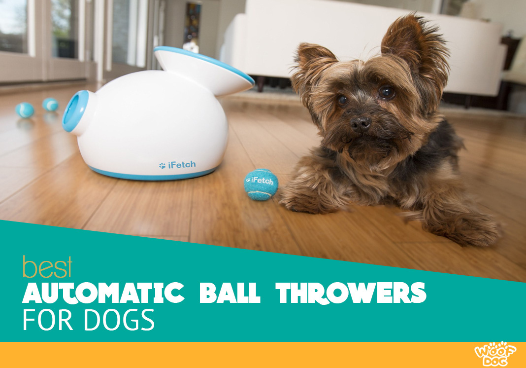 best automatic ball throwers for dogs