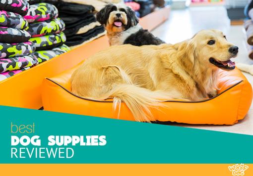 Best Dog Supplies