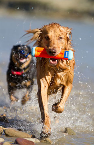 ChuckIt Amphibious Bumper Toys For Dog