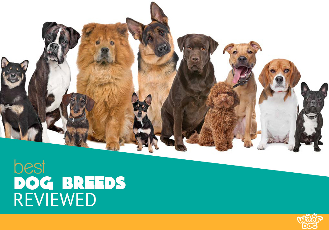 dog breeds reviewed