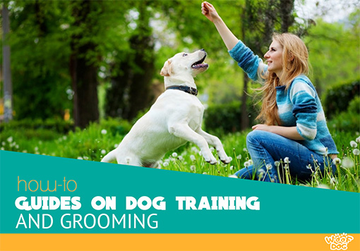 Dog Training and Grooming