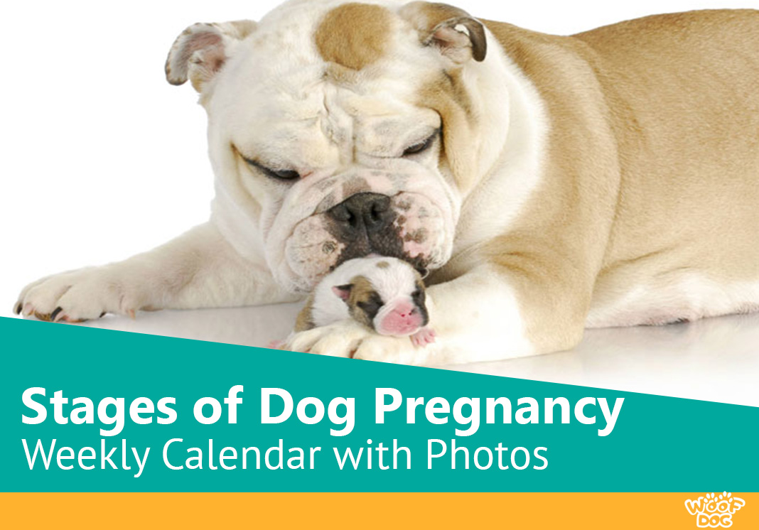 Stages of dog pregnancy week by week with photos a newly born puppy with its mother geenschuldenfo Image collections