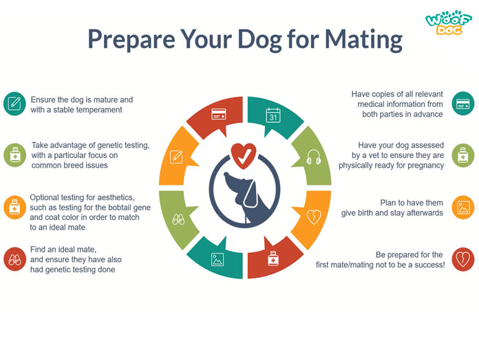 prepare your dog for mating