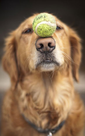 teach your dog how to play fetch