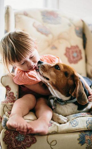 Beagles love little Anne