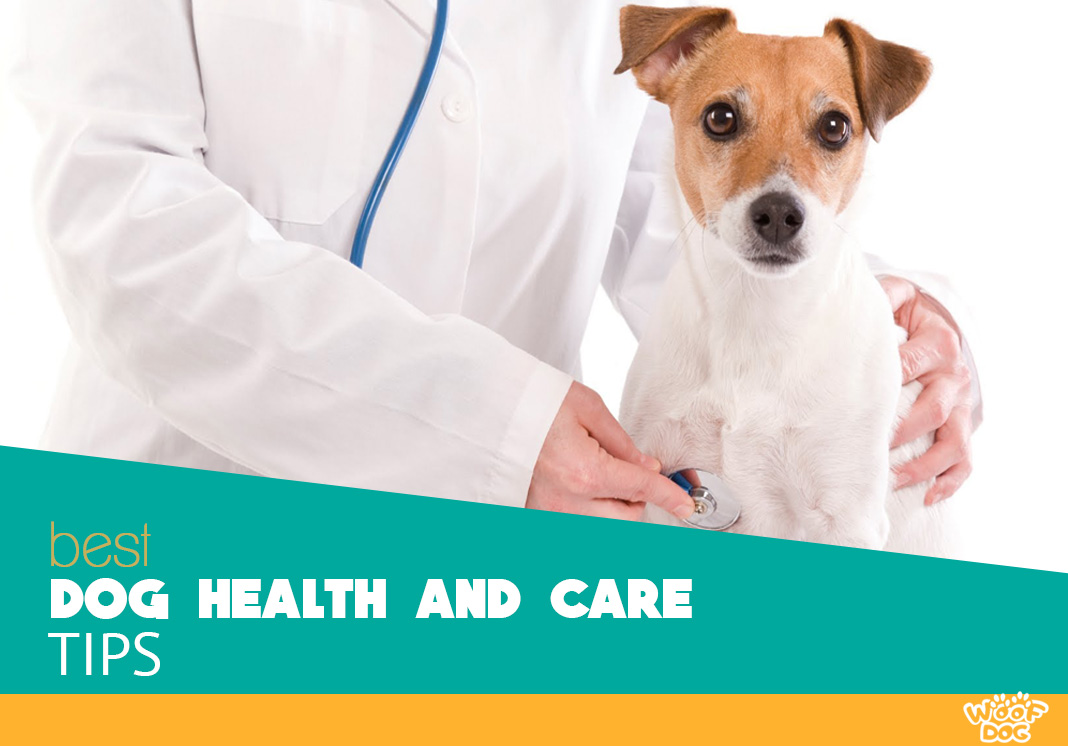 DOG health and care tips
