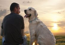 Labrador man dogs best friend