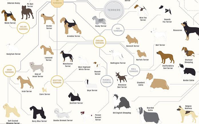 Diagram of dog breeds