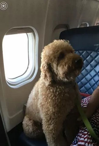 a dog on plane