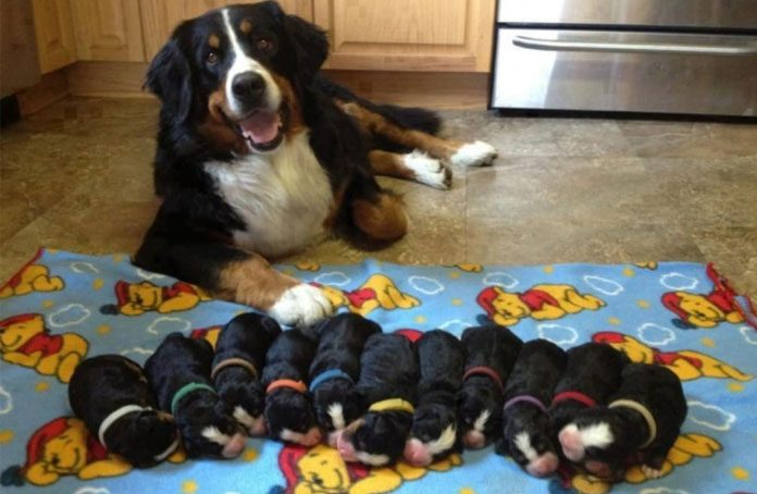 dog with her puppies