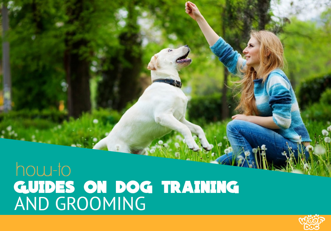 how to guides on dog training