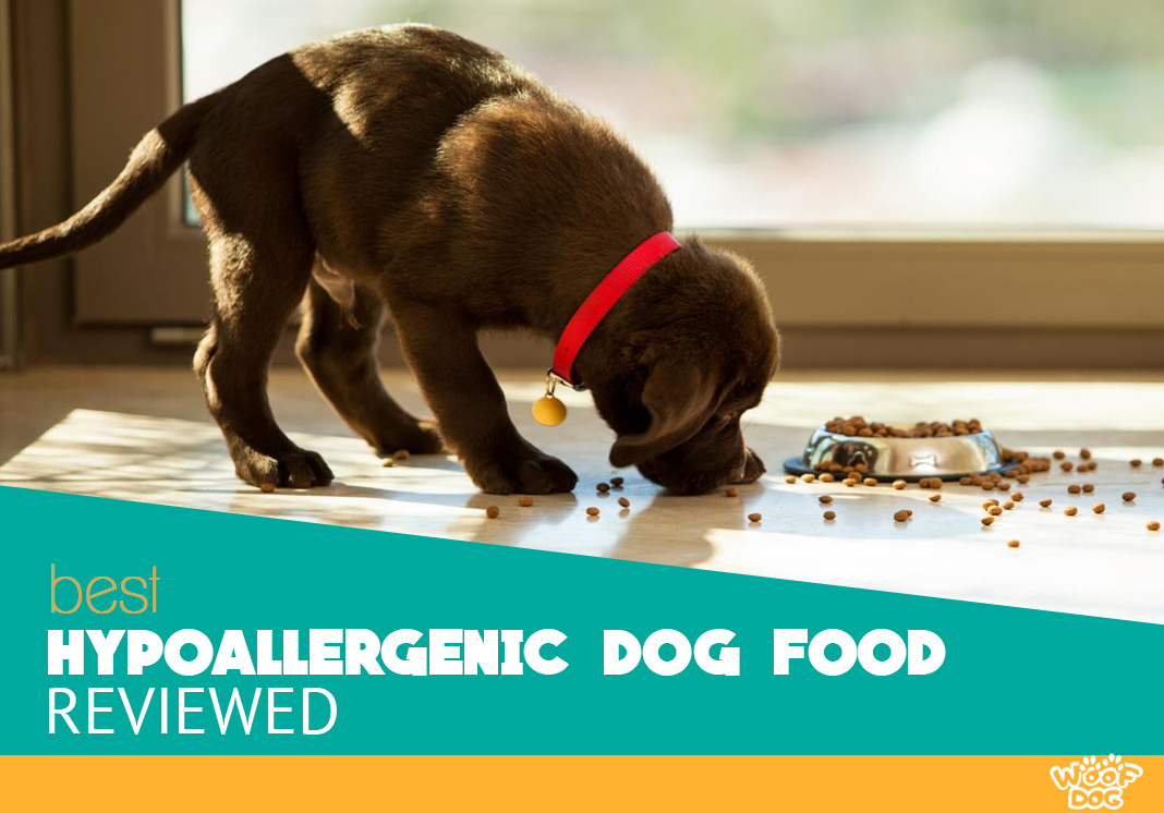 featured image showing a puppy eating hypoallergic food