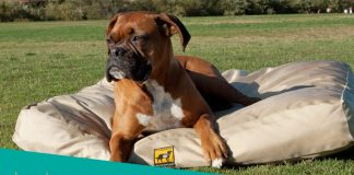 Our 5 highest rated indestructible dog beds reviewed - see our picks below