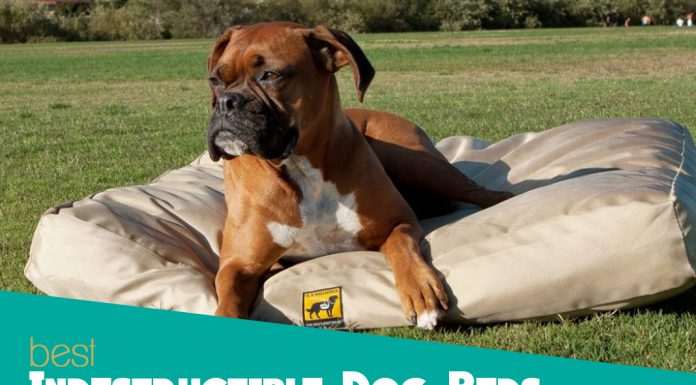 The 5 Best Indestructible Dog Beds Compared - The Ultimate
