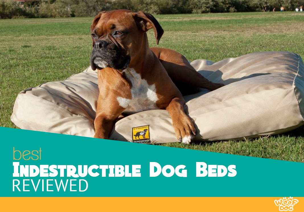 best bed dog indestructible