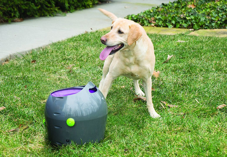 Labrador standing near PetSafe thrower