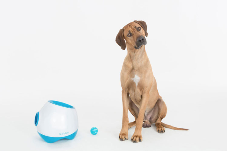 7 Best Automatic Ball Throwers For Dogs