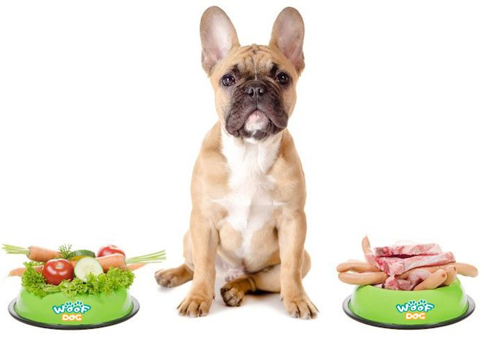 dog between healthy and unhealthy food