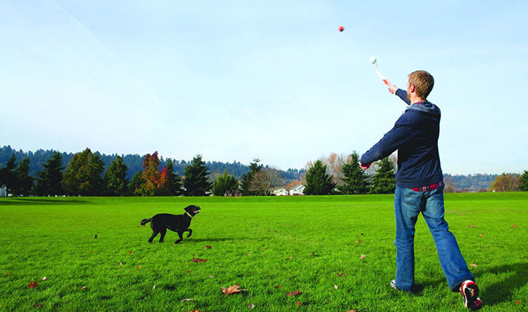 man playing with a dog using hand-held chuckit toy