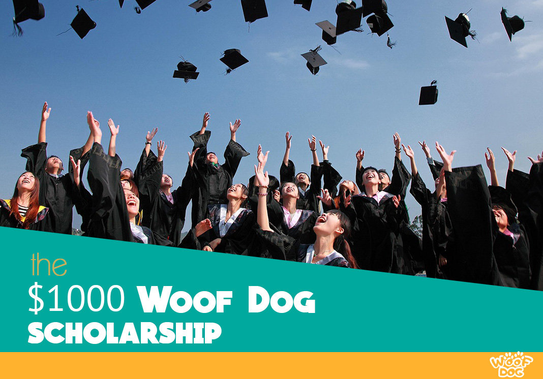 image for woof dog scholarship