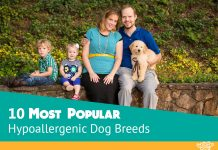 10 Most Popular Hypoallergenic Dog Breeds for Kids