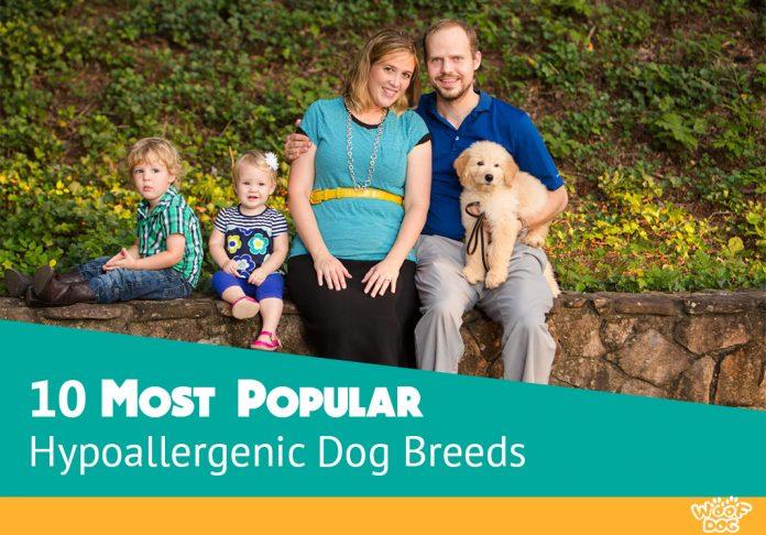 10 Most Popular Hypoallergenic Dog Breeds for Kids