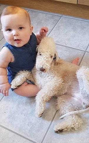 Bedlington Terrier with baby
