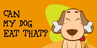 Can my dog eat that human food?