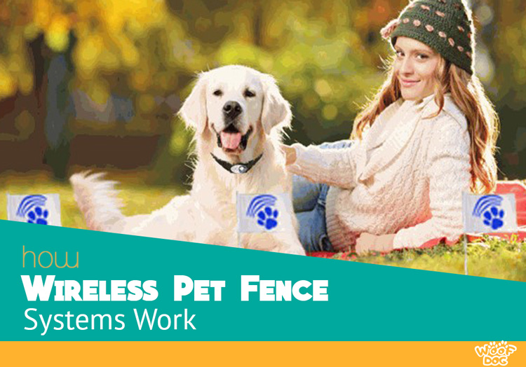 How Wireless Pet Fence Systems work
