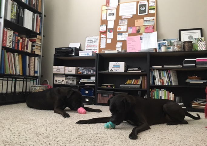 Missy & Buzz Enjoying Their Filled KONGs in My Office