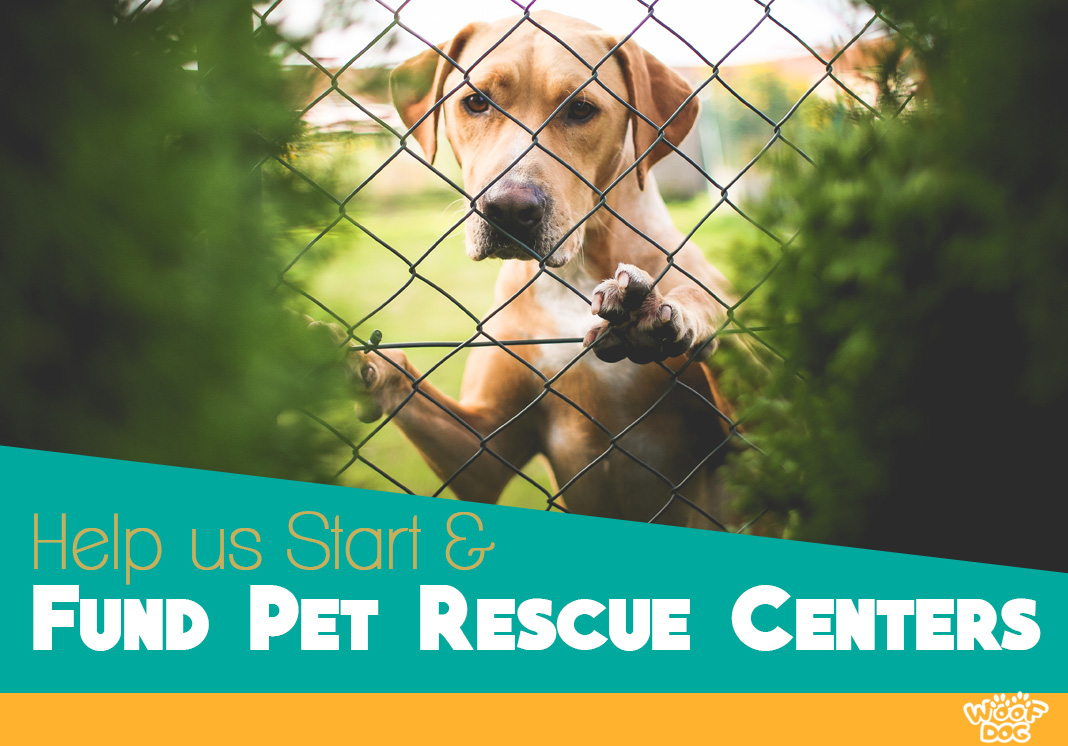 Pet Rescue Centers Cause
