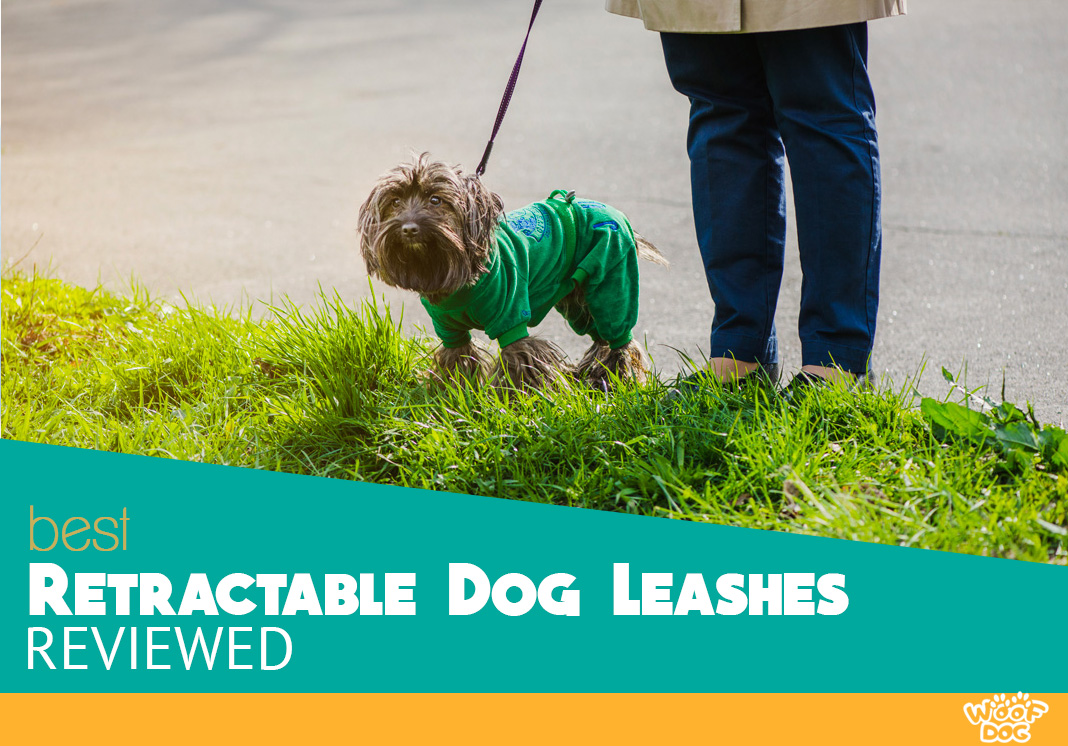 Retractable dog leash buyers guide and top picks