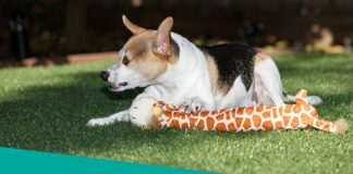 Why dogs get aggressive over food and toys