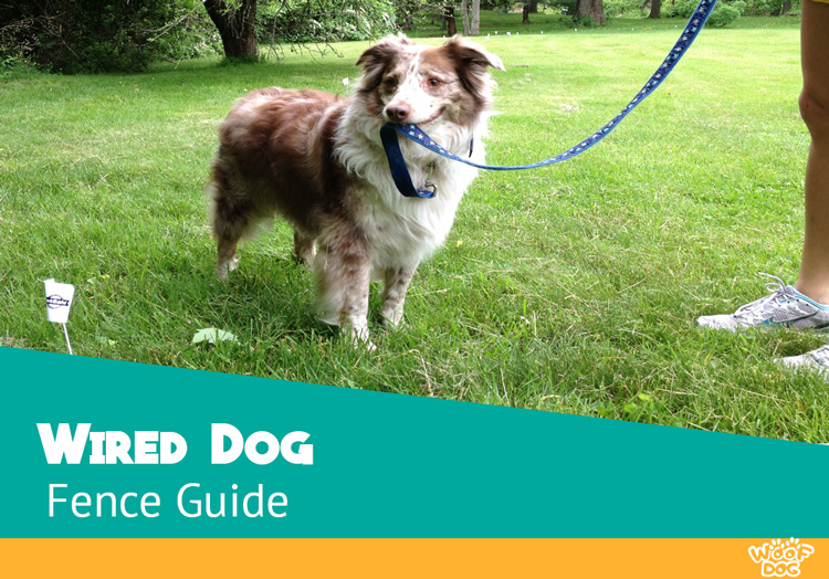 Wired Dog Fence Guide