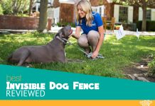Our Highest Rated Invisible Dog Fence Picks This Year