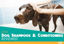Outstanding dog shampoos and conditioners