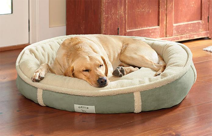 golden retriever sleep in his bed
