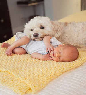 sleaping baby with Bishon Frise