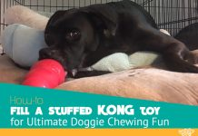stuffed KONG toy for doggie chewing fun featured image