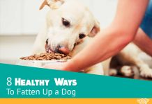Highest Rated Dog Food For Puppies