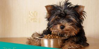 Most Delicious Dog Food for Picky Eaters Awards and Reviews