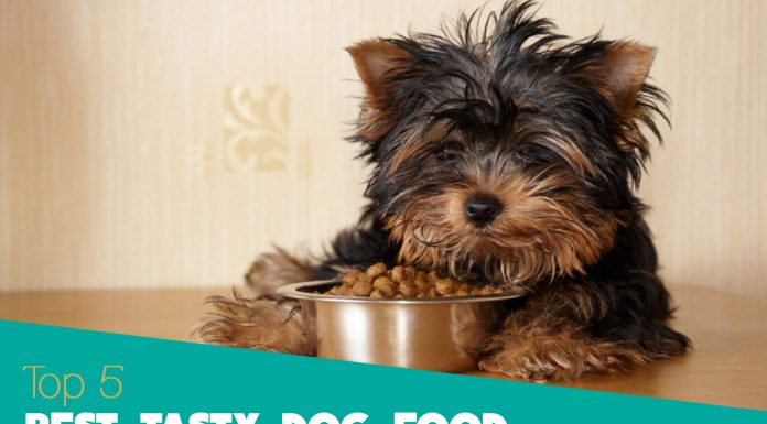 Best Dog Food for Picky Eaters - 2019 Reviews and Awards