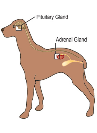 Adrenal Gland Cancer Natural Treatment