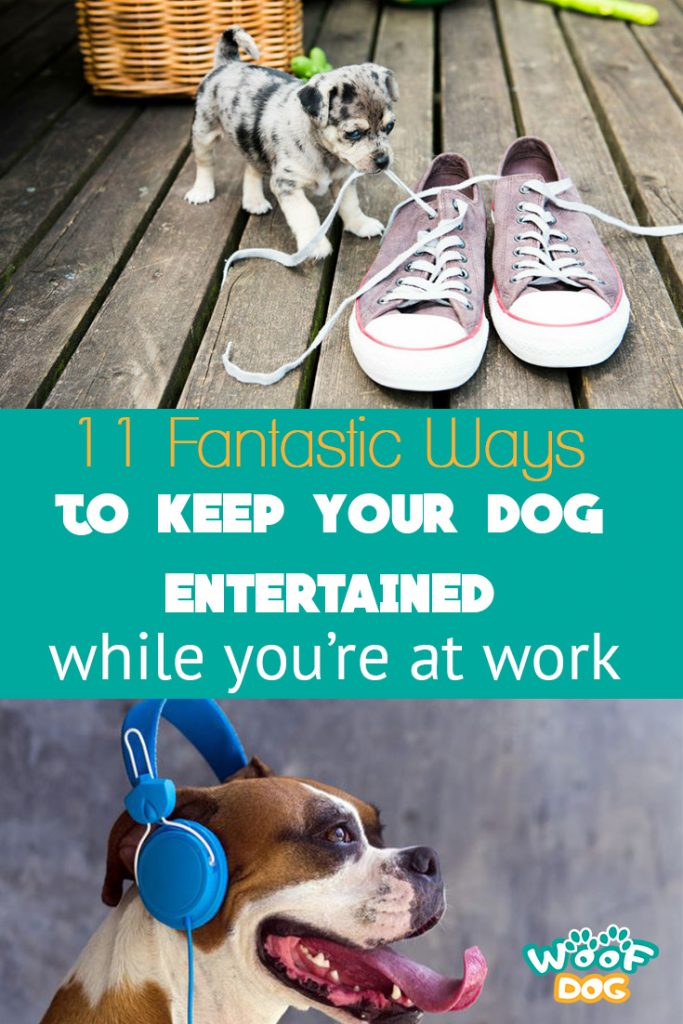 Entertained your dog pinterest image