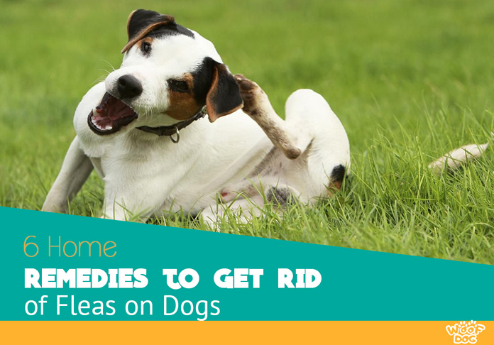 How To Get Rid Of Flea Beds On Dogs