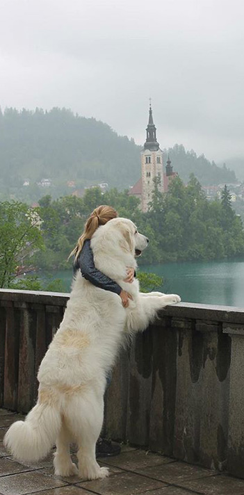 Great Pyre on Lake Bled with his owner