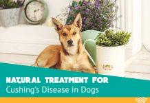 Ways to Naturally Treat Cushing Disease In Dogs