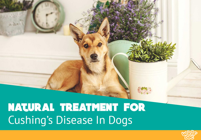 Natural Treatment for Cushing's Disease In Dogs | Woof Dog
