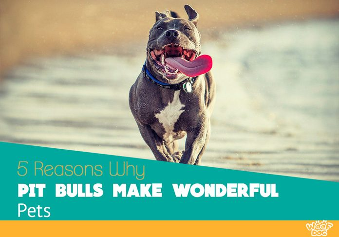 Pit Bulls are Wonderful Pets