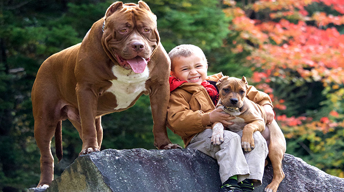 Pit Bull dogs and children